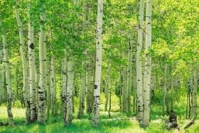 Lietuvos miškai